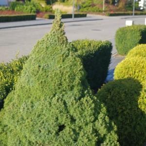 pielegnacja-terenow-zieleni-6